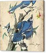 Vintage Bird Study-f Canvas Print