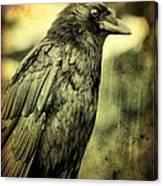 Vintage Crow Canvas Print