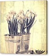 Vintage Daffodils Canvas Print