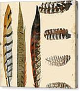 Vintage Feather Study-jp2085 Canvas Print