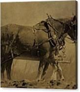 Vintage Horse Plow Canvas Print