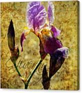 Vintage Iris Canvas Print