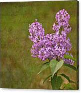 Vintage Lilac Bush Canvas Print