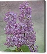 Vintage Lilacs Canvas Print