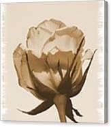Vintage Rose 2013 Canvas Print
