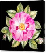 Vintage Rose Bouquet Watercolor Botanical Illustration Of A Rose