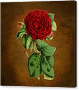 Vintage Rose Reflections Canvas Print