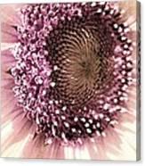Vintage Sunflower  Canvas Print
