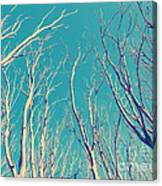 Vintage Trees Canvas Print