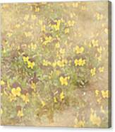 Viola Field Canvas Print