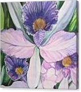 Violet Adventures Canvas Print