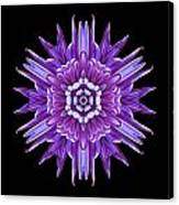Violet Chrysanthemum Iv Flower Mandala Canvas Print