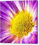 Violet Flower Macro Canvas Print