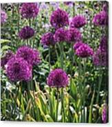 Violet Flowerbed Canvas Print