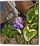 Violet In The Rust Canvas Print