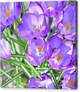 Violet Lilies Canvas Print