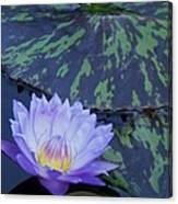 Violet Lily Canvas Print