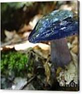 Violet Mushroom Canvas Print