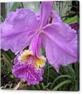 Violet Orchid Canvas Print
