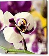 Violet Orchids Brushed With Gold Canvas Print