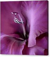 Violet Passion Gladiolus Flower Canvas Print