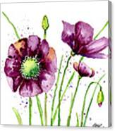 Violet Poppies Canvas Print