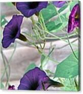 Violet Vine - Photopower 326 Canvas Print
