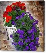 Violets And Geraniums On The Bricks Canvas Print