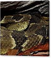 Viper Den Canvas Print