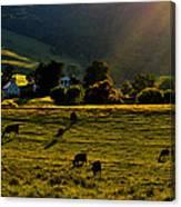 Virginia Countryside Canvas Print