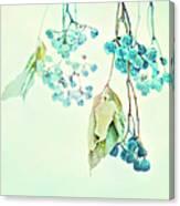 Virginia Creeper Berries Canvas Print