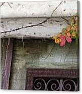 Virginia Creeper In Fall Colors Canvas Print