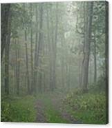 Virginia - Shenandoah National Park - Road Not Taken Canvas Print