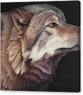 Virginia The Wolf Canvas Print