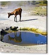 Visitor At West Thumb Basin Canvas Print