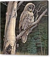 Visitor From The North-great Grey Owl Canvas Print