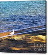 Visitor - Lake Tahoe Canvas Print