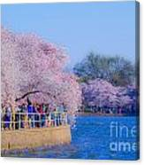 Visitors To The Blooms On The Basin Canvas Print