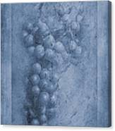 Vitis Cyanotype Canvas Print