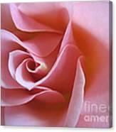 Vivacious Pink Rose 2 Canvas Print