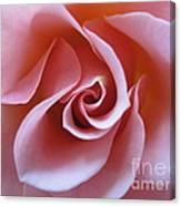 Vivacious Pink Rose 3 Canvas Print
