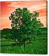 Vivid Blood Red Sky Canvas Print