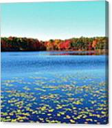 Vivid Fall Colors Canvas Print