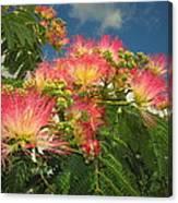 Voluntary Mimosa Tree Canvas Print