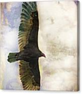 Vulture In Color Canvas Print