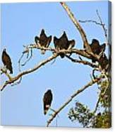 Vulture Tree Full Of Buzzards Canvas Print
