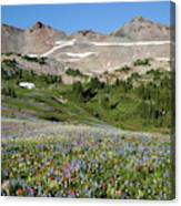 Wa, Goat Rocks Wilderness, Wildflower Canvas Print