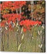 Wachusett Meadows 4 Canvas Print