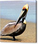 Wadding Pelican  Canvas Print