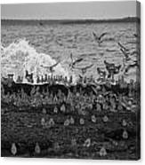 Wading Birds-black And White V2 Canvas Print